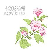 Set of tropical floral ornaments for design greeting cards. Hibiscus.